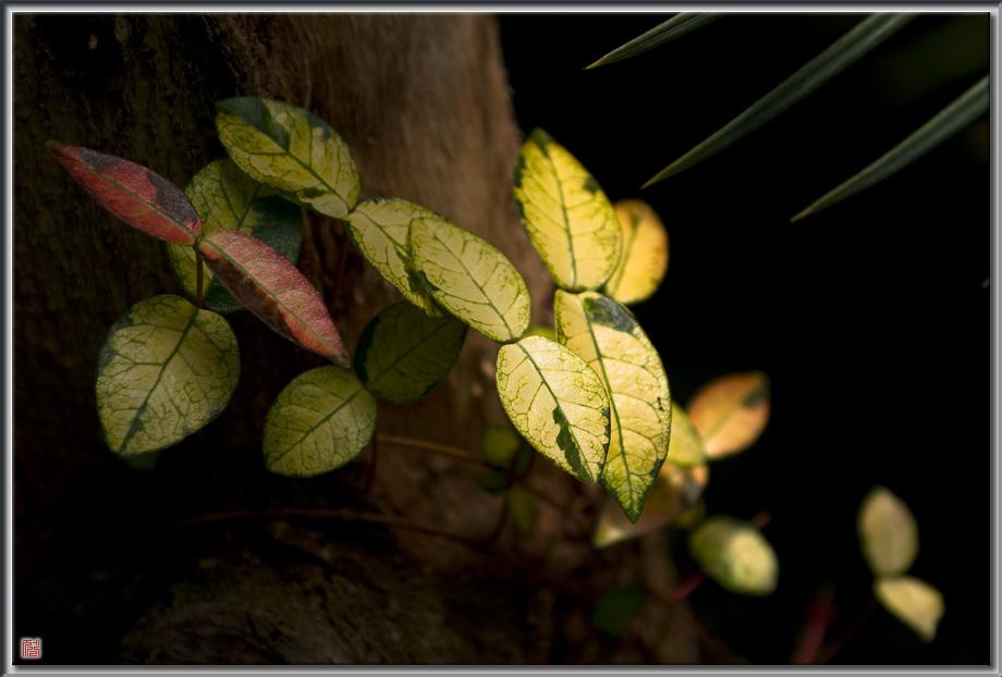 잎이 꽃이어라...