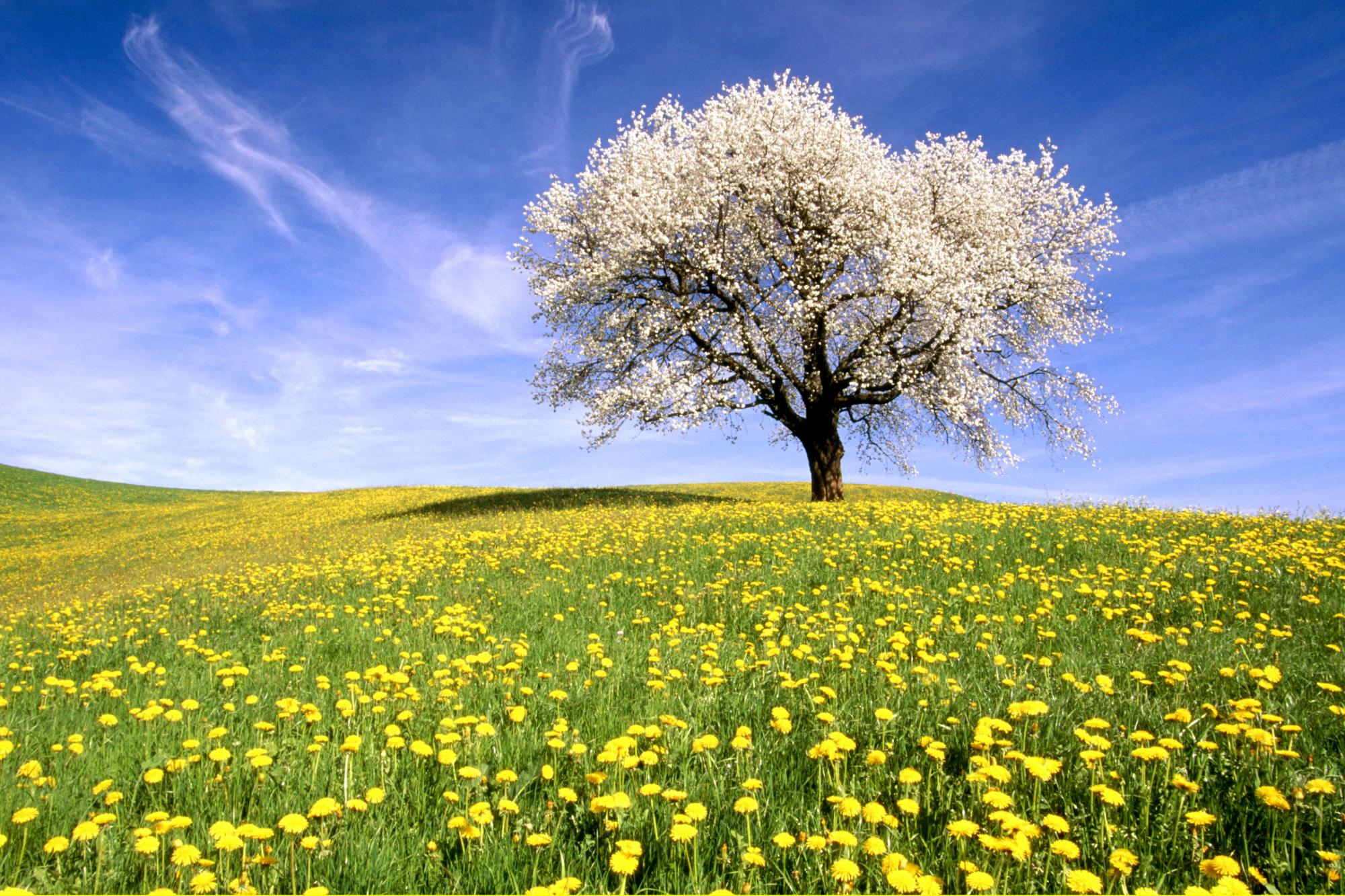 Flowers Photos Roopretelcham 멋진 풍경 바탕화면