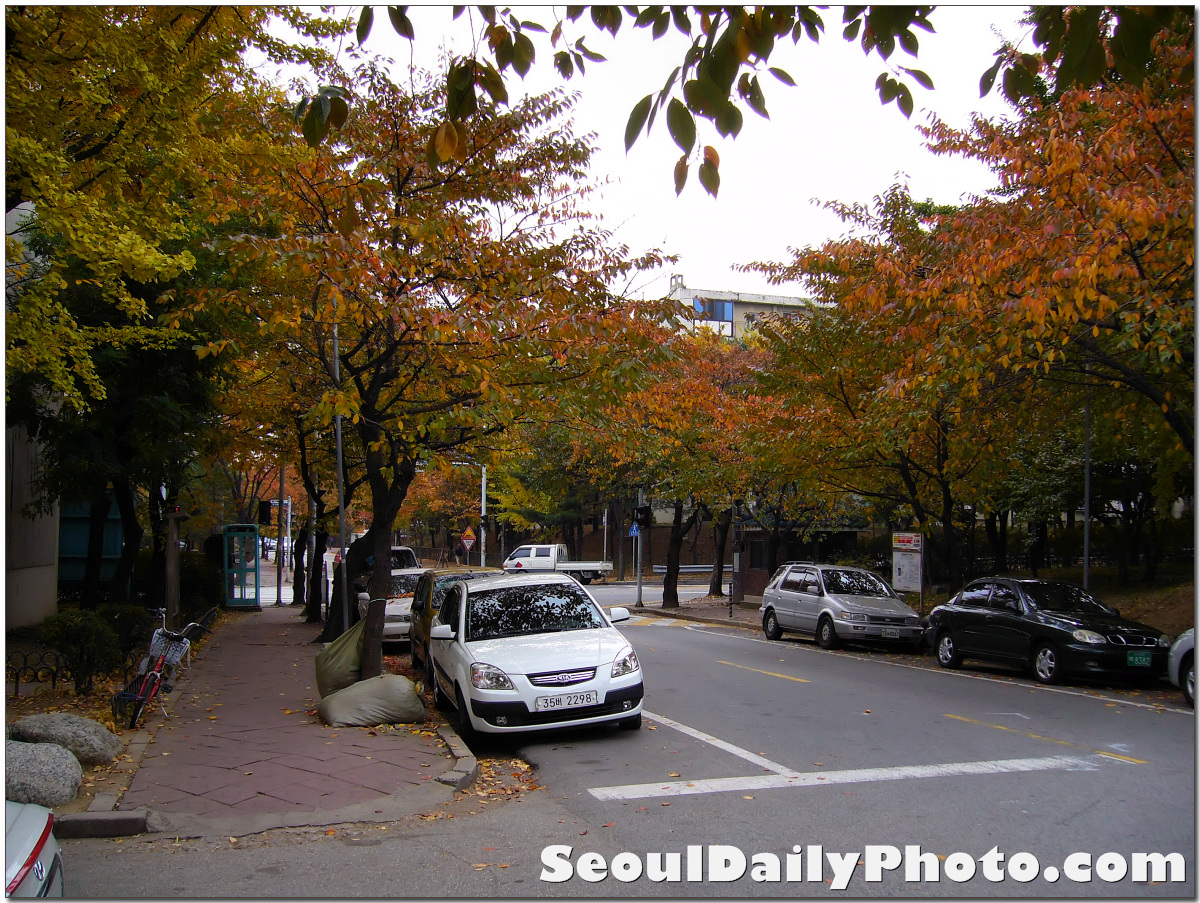 welcome in My House: Autumn In Korea